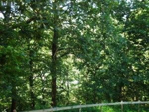 La Citadelle sous les arbres 4